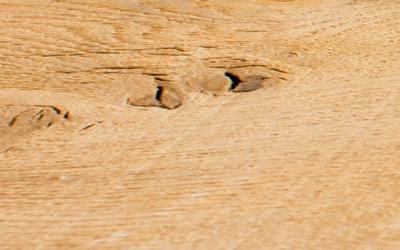 Oak (Fresh Sawn)