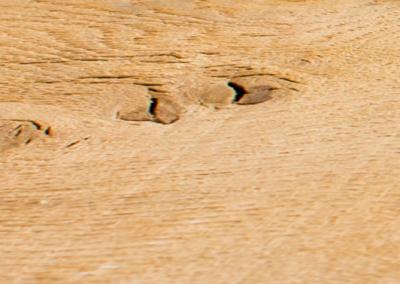 Oak Fresh Sawn 1