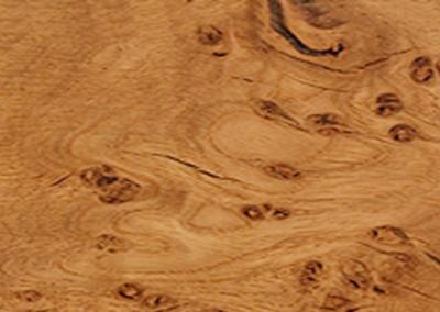 Pippy Oak 1